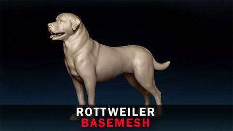 Rottweiler Basemesh 3D model