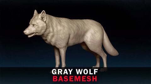 Gray Wolf Basemesh 3D model