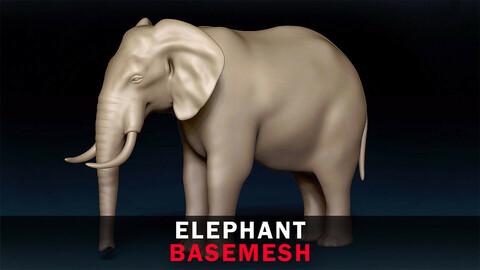 Elephant Basemesh 3D model