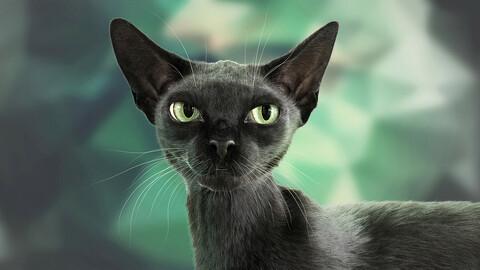 Cat Black Fur Shorthair Animated XGen Core