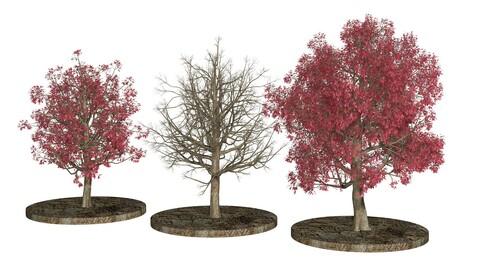 Three Pink trees v2