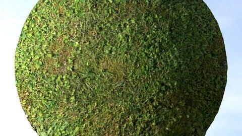 Grass 14 PBR Material
