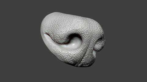 Dog Nose ZBrush Sculpt