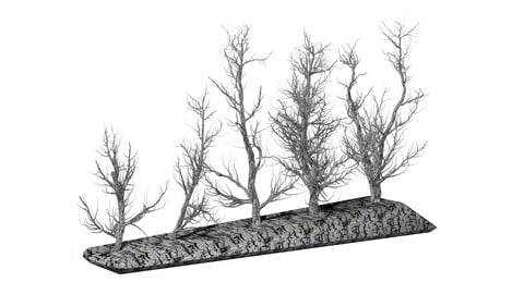 Root 5 trees low-poly