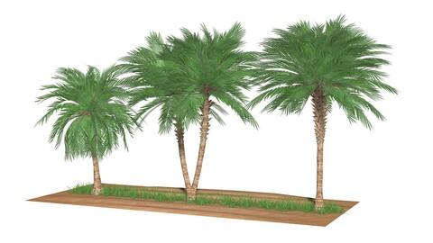 Three palms set