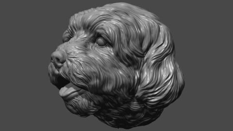 Lhasa Apso  head dog