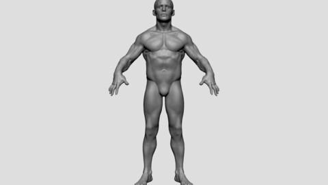 Male Anatomy A