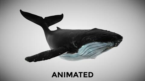 Humpback Whale 3DS Max Octane FBX OBJ support