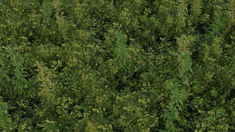 [Addon]Grass it (Blender 2.93+)