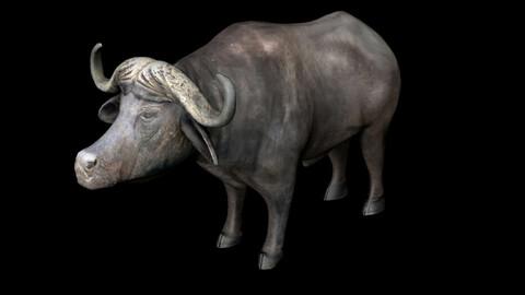 Buffalo African buffalo bull cow black cow buffalo horn buffalo horn