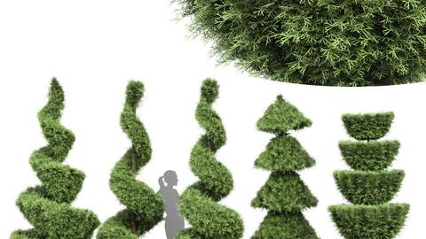 Beloved Italian Cypress 5 trees ideas