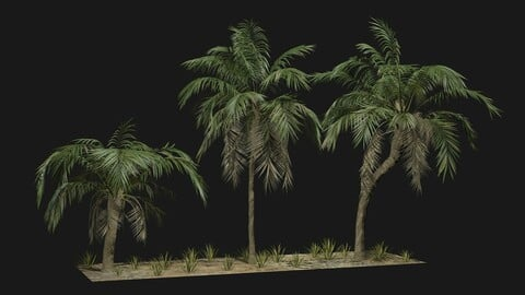 Tropical Palm 3 trees