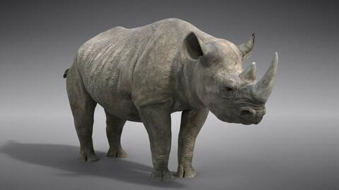 African Rhinoceros Animated   VFX Grace