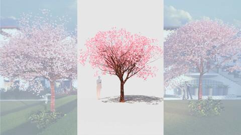 cherry tree flowering prunus avium d