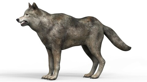 Low Poly Wolf With PBR Textures