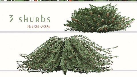 Set of Cotoneaster Salicifolius Shrubs (Willow-leaved cotoneaster) (3 Plants)