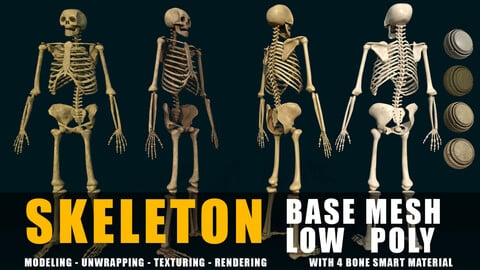 Anatomical High Quality low poly Human Skeleton base mesh and game ready+4 smart material bone