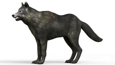 Black Wolf With PBR Textures