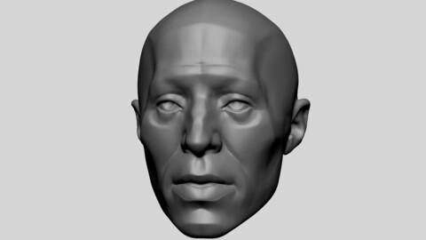 Base Male Head Anatomy