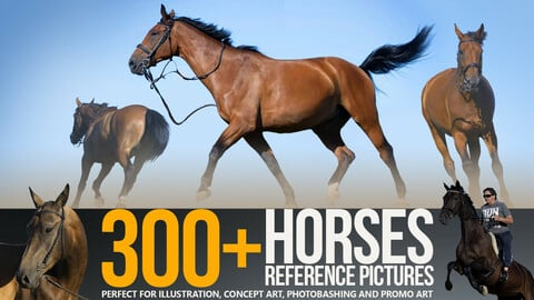 300+ Horses Reference Pictures