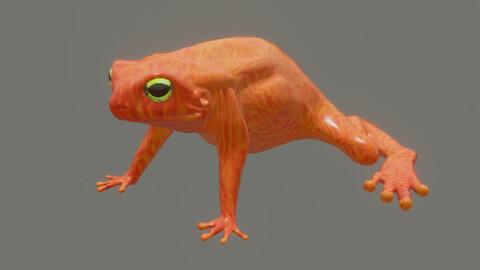 toad Incilius periglenes