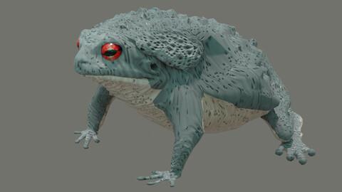 toad  bufo alvarius