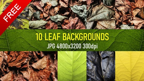 10 Free texture reference background photos of dried, burned, fresh leafs.