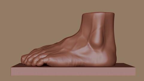 Male Feet Anatomy