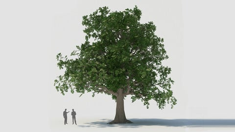 tree003