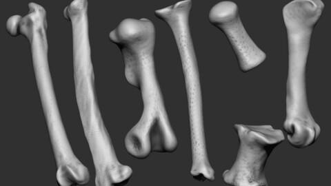 Pack of different animal bones IMM brush.