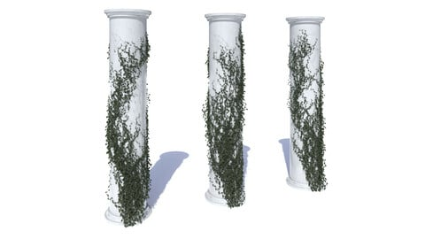 Collection of different ivy on the columns