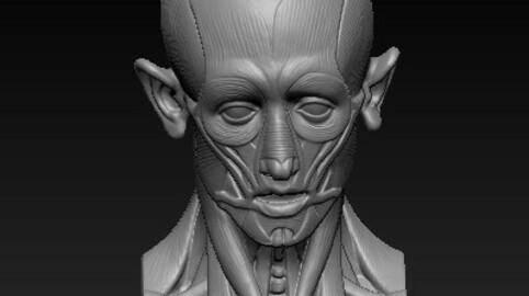 muscular head 3D ( 2021)