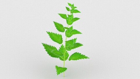 Stinging Nettle Low Poly