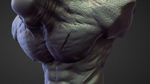 TORSO2 high poly sculpt