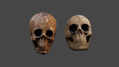 Realistic high resolution human Skulls