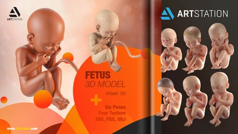 Human Fetus 3D Model + six poses