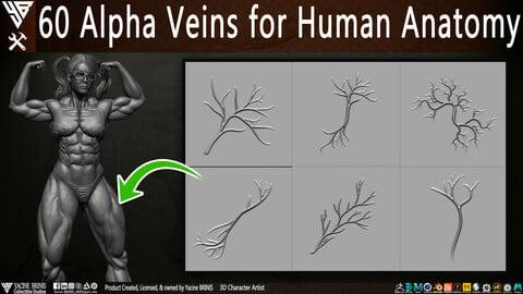 60 Alpha Veins for Human Anatomy