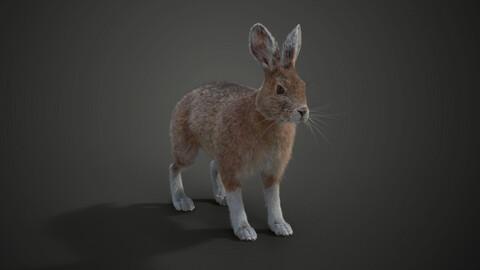 3D Animal | Snowshoe Rabbit | VFX Grace