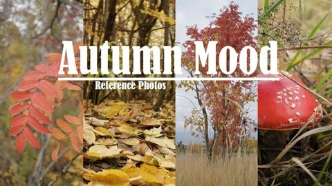 Autumn Mood, 469 Reference Photos