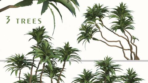 Set of Ficus pseudopalma Trees (Philippine fig) (2 Trees) ( 3Ds MAX - Blender - Cinema4D - FBX - OBJ )