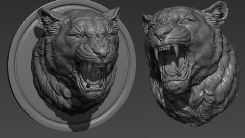 Lioness grin roar
