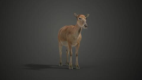 Female Deer Animated | VFX Grace