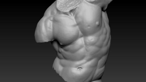 Gaddi Torso 3D (obj)