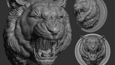 Tiger grin roar