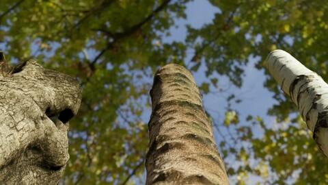 3 Photorealistic Tree Trunks