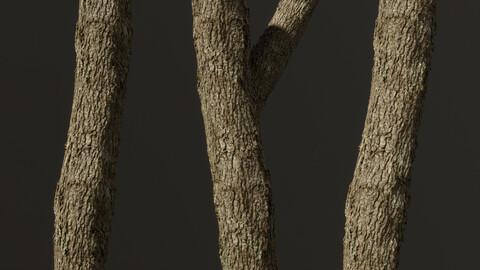 Sweetgum Tree Bark