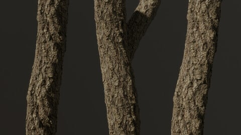 Coniferous Tree Bark - Vol.1