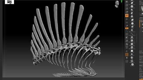 Spinosaurus 2020 version Rib Set Skeletons Sculpt Project