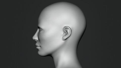 Free Bust Head Base Mesh