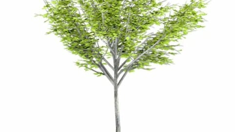 Resource-Plant Country elm